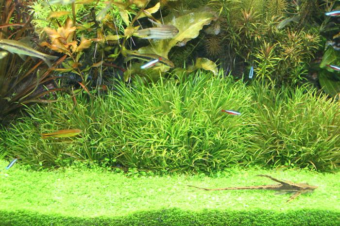 Аквариумные растения куба